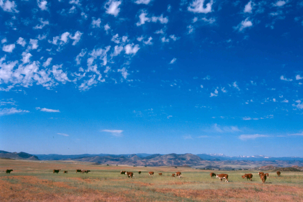 Image 4: Roberts Ranch Conservation Easement