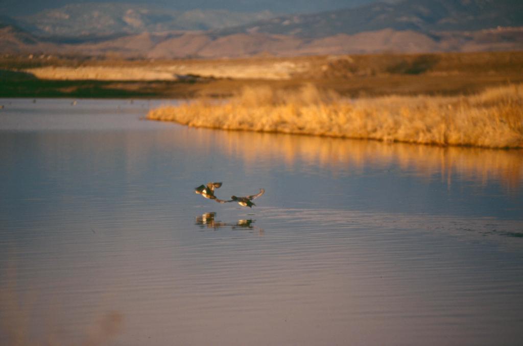 Image 1: Kauffman Conservation Easement