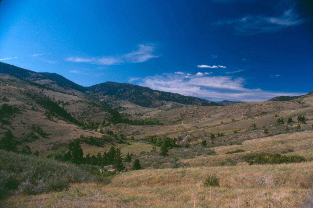 Image 5: Blue Mountain Bison Ranch