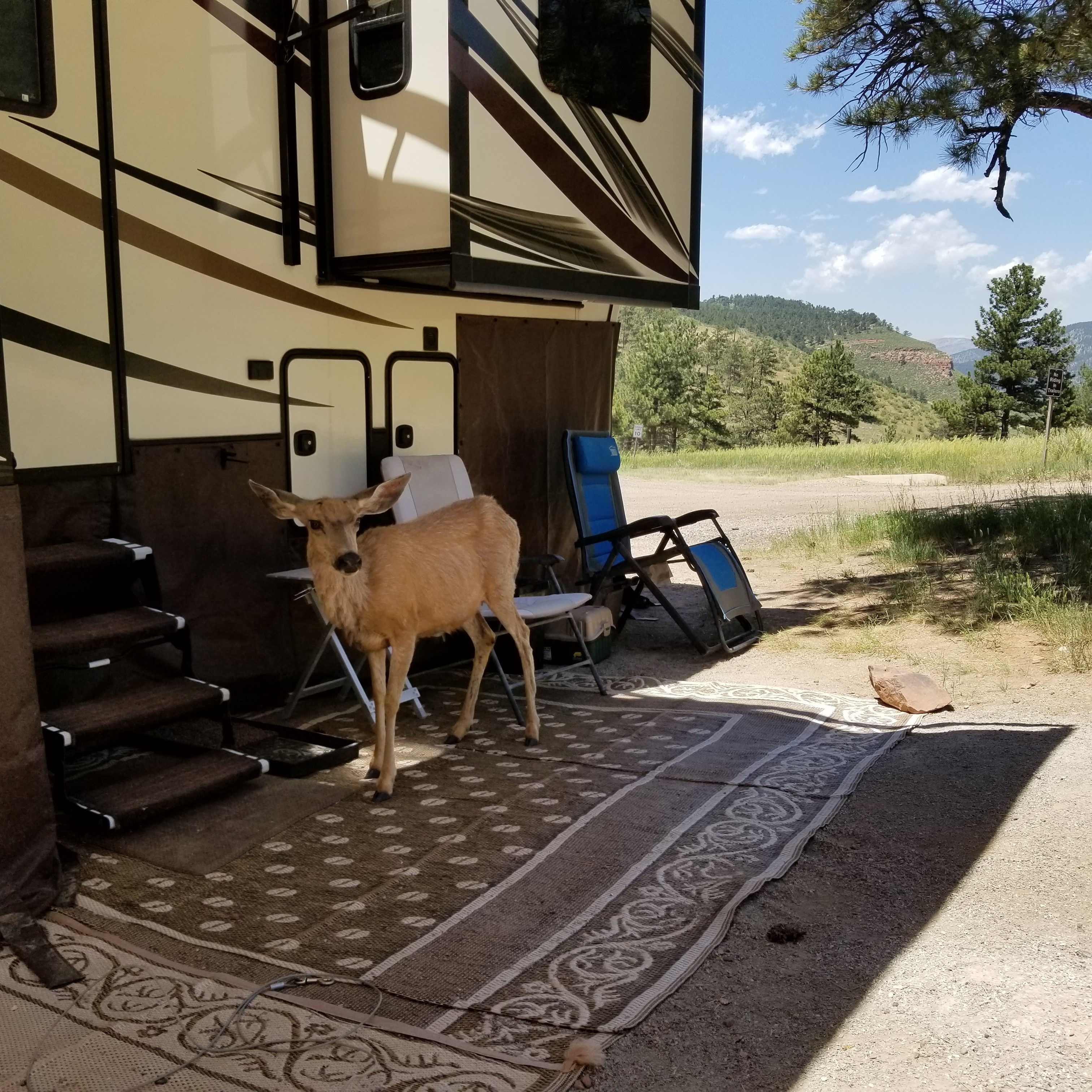 Enlace de solicitud de anfitrión de campamento voluntario