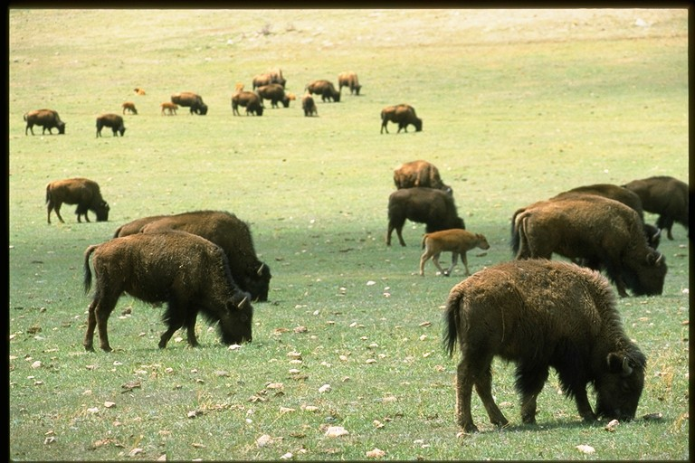 Image 1: Blue Mountain Bison Ranch