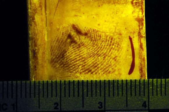 Imagen 2: Laboratorio de delincuencia y medicina forense