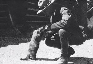 Image 5: Ranger feeding marmot, 1930's