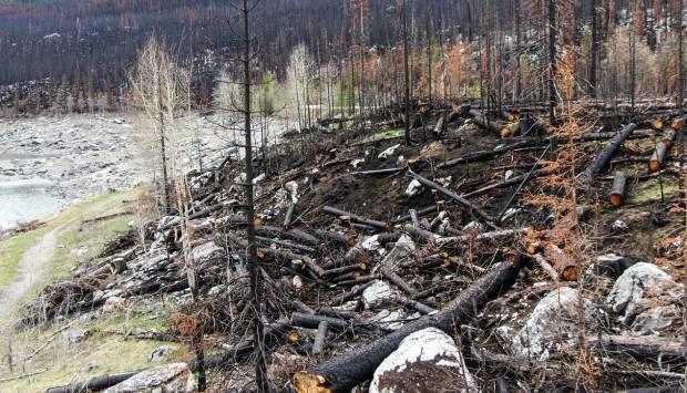 Assessor's office to survey Cameron Peak Fire properties