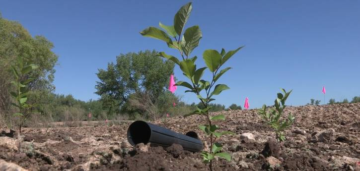Restoring the Poudre River to a Natural State at River Bluffs