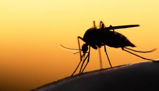Silueta de un mosquito al atardecer