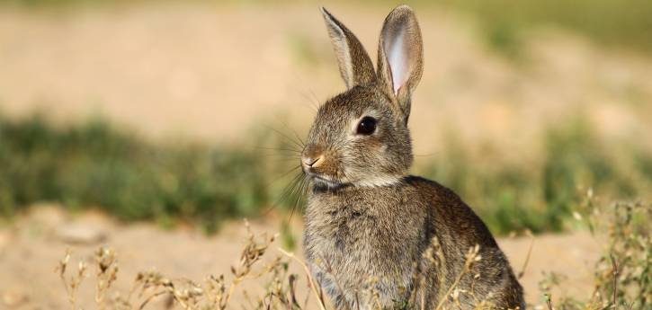 Human Tularemia Case Confirmed in Larimer County