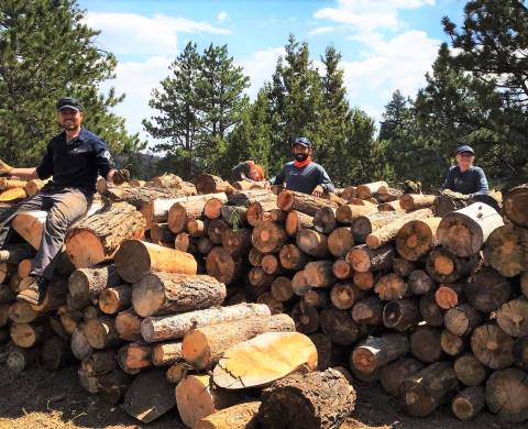 Forestry Crew