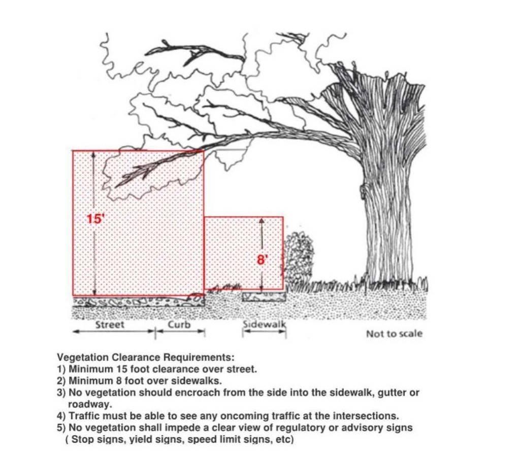 Vegetation Trimming Guidelines