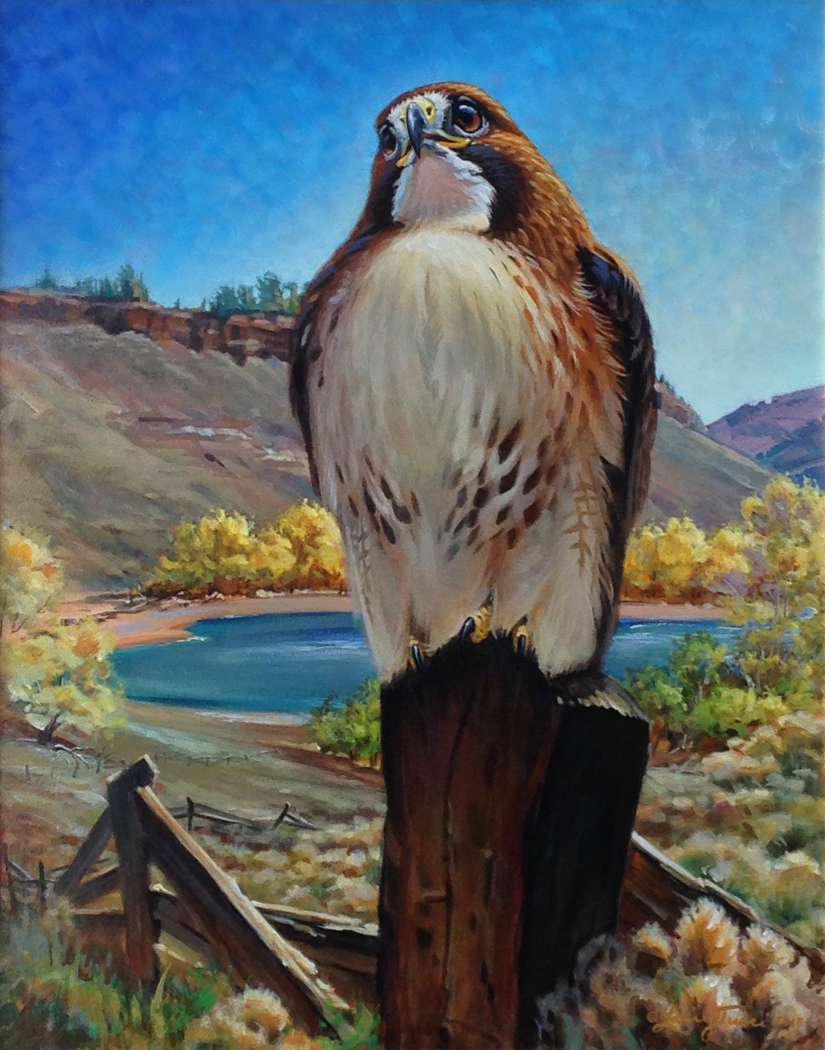 "Image 2: ""A Proud Heritage - Red-tailed Hawk at Soderberg by Larry Tucci, 2017 Visual Artist of the Year"